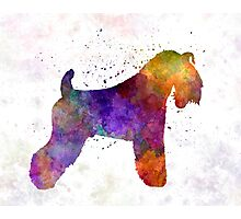 Kerry Blue Terrier 01 in watercolor Photographic Print