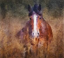 Horse in field by Julia Shepeleva