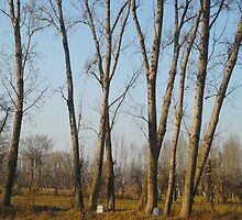 Tree lover by Zohaib Ali