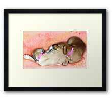 Pound Puppies dreaming of a home to call their own. Framed Print
