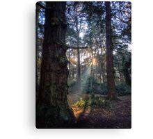 Shining Woodlands Canvas Print