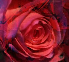 Rose Indigo Abstract3 by MQ20
