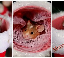 Merry Mouse Christmas by Corrine Symons