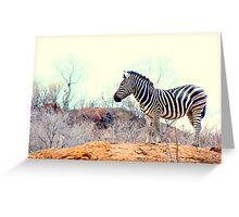 Burchelle Zebra #2 Greeting Card