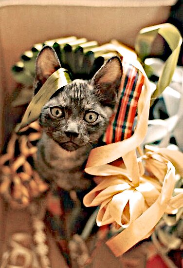 Kitten With Ribbons by John Butler