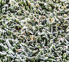 OMG! San Diego Frost???? by heatherfriedman