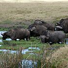 Water Buffalo In The Marsh by phil decocco