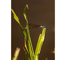Dragonfly over muddy waters Photographic Print