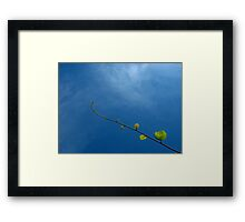 Kiwi and blue sky Framed Print