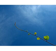 Kiwi and blue sky Photographic Print