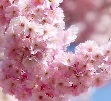 Almond Blossoms by Martina Cross