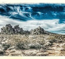 colorado desert -- joshua tree national park by pj johnson