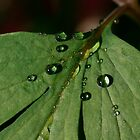 Raindrops Two by edesigns14