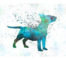 Miniature Bull Terrier in watercolor Photographic Print