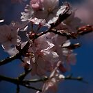 Pink Springtime Blossom by edesigns14