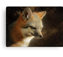 Gray Fox Canvas Print