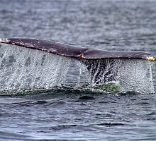 Whale of a Tail by JamesA1