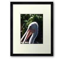 Pelican at the Zoo Framed Print
