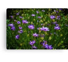 Velvet Flowers Canvas Print
