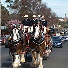 CUB Clydesdales visiting Warragul, Gippsland by Bev Pascoe