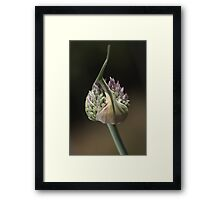 flower-garlic-bud Framed Print