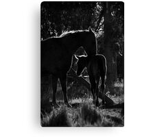 A special evening moment Canvas Print