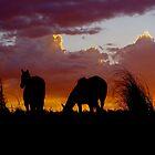 Sunset Friends by Penny Kittel