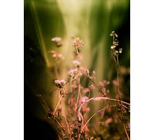 Flowers by the bushland Photographic Print