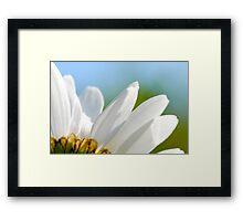 Giant daisy petals Framed Print