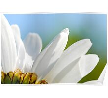 Giant daisy petals Poster