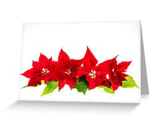 Arrangement with Christmas poinsettias Greeting Card