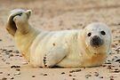 Beach Baby by CBoyle