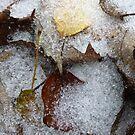 Sleet On The Leaves by WildestArt