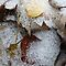 SLEET, SNOW &/OR  ICE ON THINGS( no landscapes/houses)