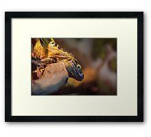 Lizard King Framed Print