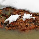 Snow And Leaves   by WildestArt