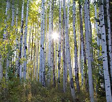 Aspen Apparition  by Ken Fleming