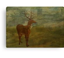 Looking for Landseer Canvas Print