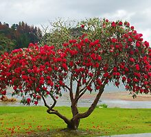 Rhododendrun Tree by lezvee