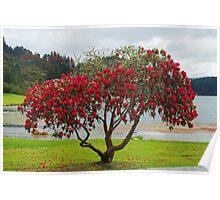 Rhododendrun Tree Poster