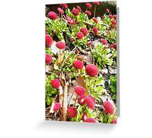 Flower Porn Greeting Card