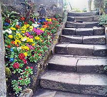 Step and Flowers. by trentaaron1981