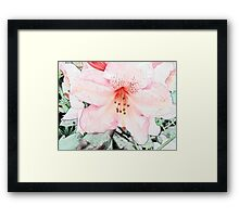 Pink rhododendron, azalea flower photo art. color pencil sketch style. Framed Print