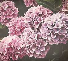 Pink and Purple Hydrangea Flowers by Elizabeth Thomas