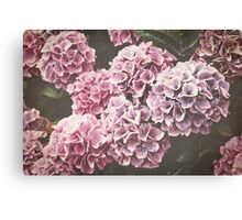 Pink and Purple Hydrangea Flowers Canvas Print