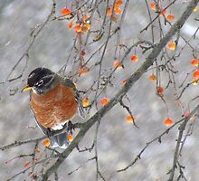 Birdie in the snow by Alberto  DeJesus
