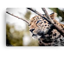 Love Panther IV Canvas Print