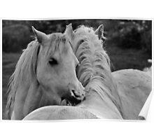 White Horses - Ceffylau Gwyn Poster