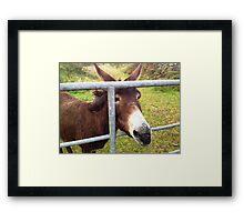 Donkey in Kerry, Ireland Framed Print