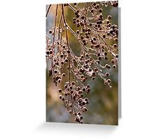 Frozen Tree Berries   1827 Color Greeting Card
